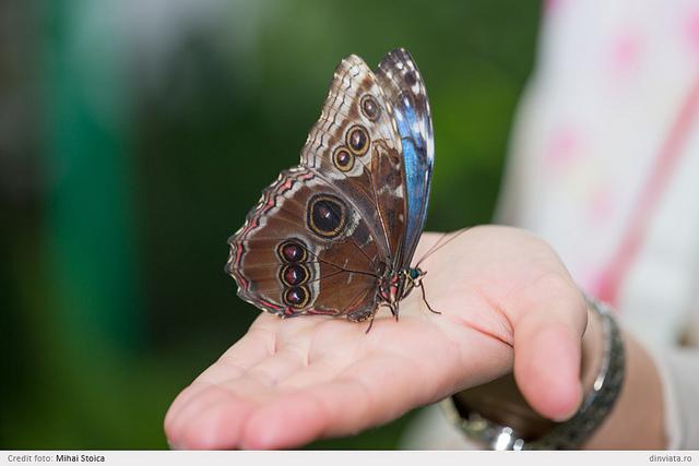 Expozitie de fluturi exotici in climat tropical